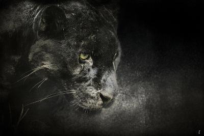 Out of the Shadows Black Leopard-Jai Johnson-Giclee Print