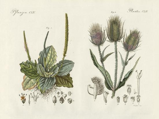 Outstanding Plants--Giclee Print