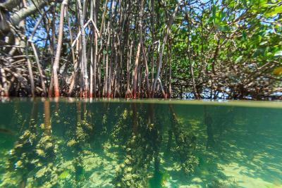 Over and under Shot of Mangrove Roots in Tampa Bay, Florida-James White-Photographic Print