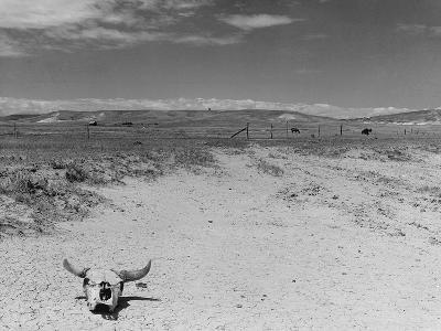 Over Grazed Land-Arthur Rothstein-Photographic Print