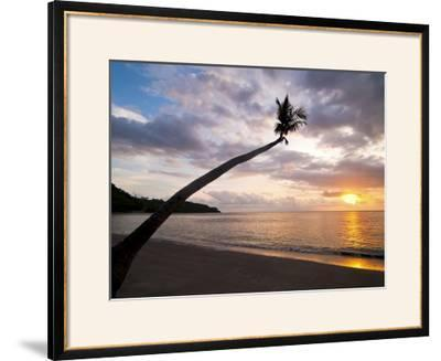 Overhanging Palm Tree at Nippah Beach at Sunset, Lombok Island, Indonesia, Southeast Asia-Matthew Williams-Ellis-Framed Photographic Print