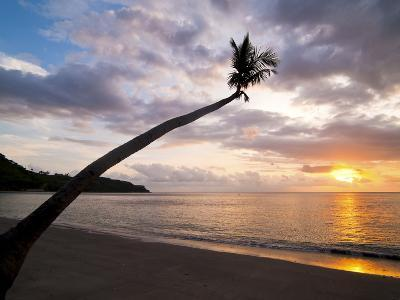 Overhanging Palm Tree at Nippah Beach at Sunset, Lombok Island, Indonesia, Southeast Asia-Matthew Williams-Ellis-Photographic Print