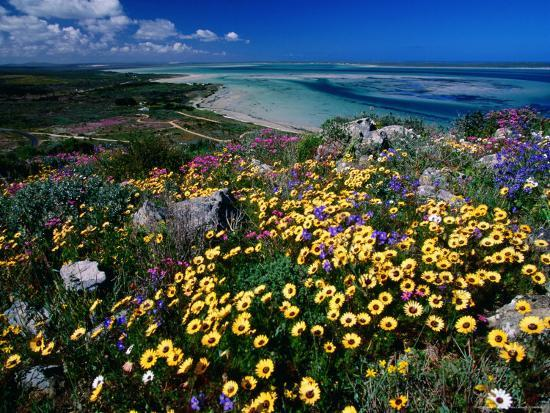 Overhead of Beach and Wildflowers-Frans Lemmens-Photographic Print