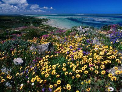 https://imgc.artprintimages.com/img/print/overhead-of-beach-and-wildflowers_u-l-p5xsj50.jpg?p=0
