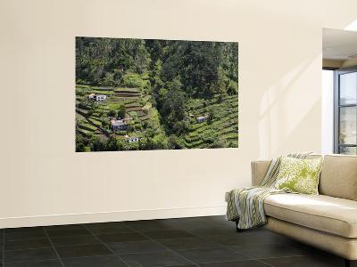 Overhead of Hillside Terraces-Holger Leue-Wall Mural