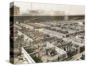 Overhead View of Chicago Stockyards