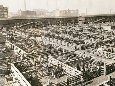 Overhead View of Chicago Stockyards--Photographic Print