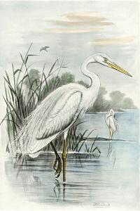 Oversize White Heron