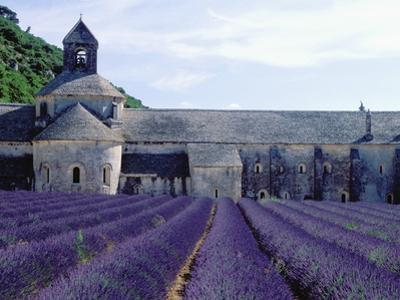 Lavender Field at Abbeye du Senanque by Owen Franken