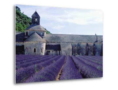 Lavender Field at Abbeye du Senanque