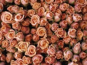 Pink Roses at Albert Kuyp Market by Owen Franken