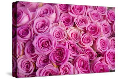 Roses for Sale in a Florist