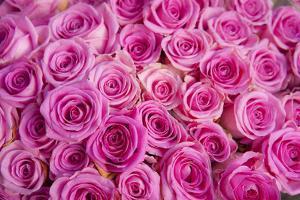 Roses for Sale in a Florist by Owen Franken