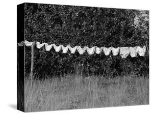 Underwear Hanging to Dry by Owen Franken