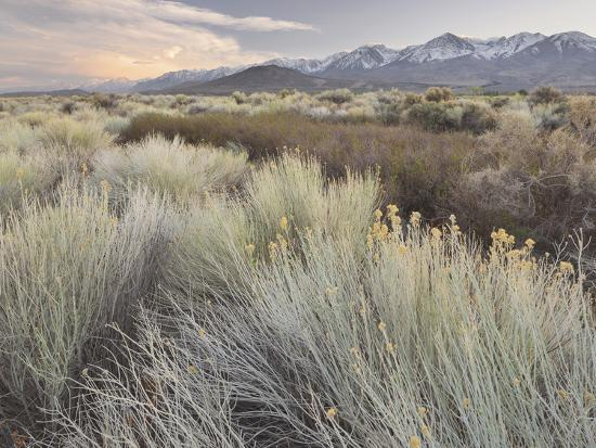 Owens River Valley, Sierra Nevada, California, Usa-Rainer Mirau-Photographic Print