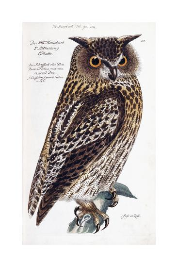 Owl, 1733-1763--Giclee Print