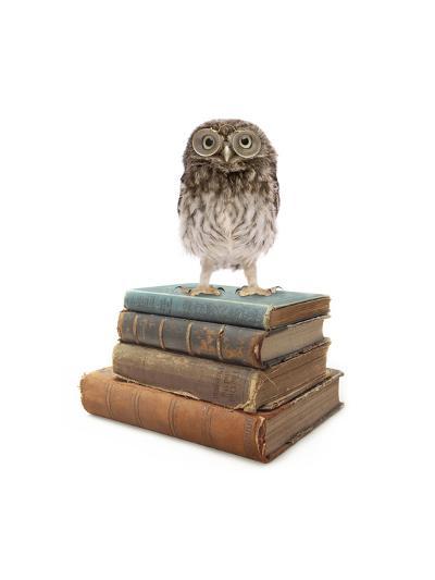Owl and Books-J Hovenstine Studios-Giclee Print