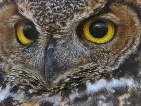 Owl Eyes-Larry McFerrin-Photo