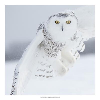Owl in Flight I-PHBurchett-Art Print