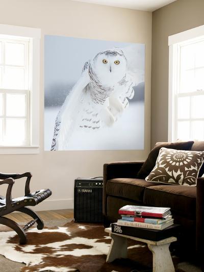 Owl in Flight I-PHBurchett-Wall Mural