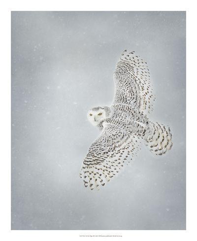 Owl in Flight II-PHBurchett-Art Print