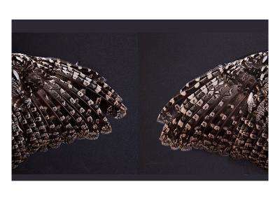 Owl Wings-Judy Tuwaletstiwa-Premium Giclee Print