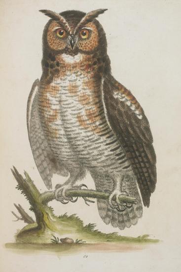 Owl--Giclee Print