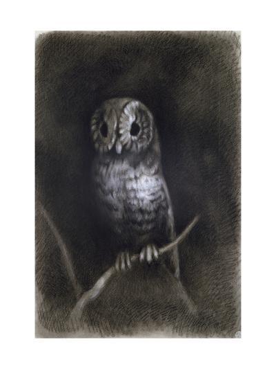 Owl-Andrea Mantegna-Giclee Print