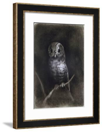 Owl-Andrea Mantegna-Framed Giclee Print