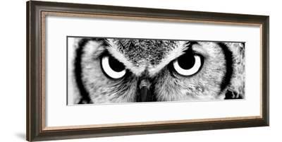 Owl-PhotoINC-Framed Photographic Print