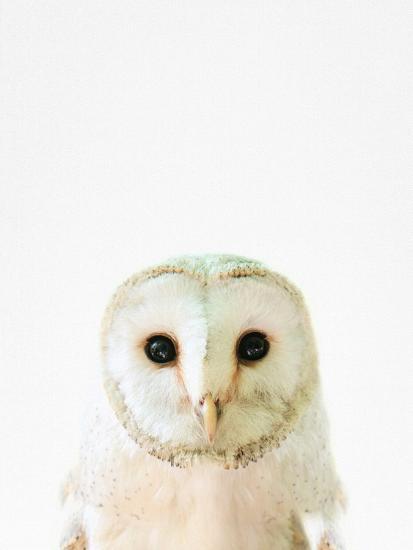 Owl-Tai Prints-Photographic Print