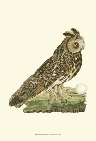 Owls III-Nozeman-Art Print