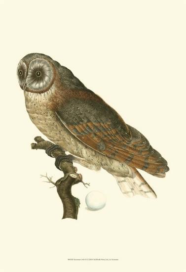 Owls IV-Nozeman-Art Print