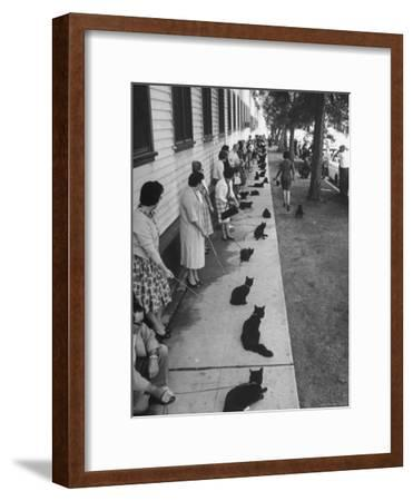 "Owners with Their Black Cats, Waiting in Line For Audition in Movie ""Tales of Terror""-Ralph Crane-Framed Premium Photographic Print"