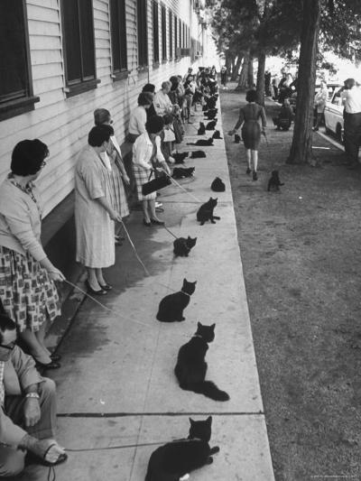 """Owners with Their Black Cats, Waiting in Line For Audition in Movie """"Tales of Terror""""-Ralph Crane-Photographic Print"""