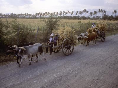 Ox Carts on the Road Between Tehuantepec and Juchitan, Oaxaca, Mexico-Kent Kobersteen-Photographic Print