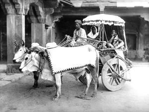 Ox-Drawn Cart, India, C.1907