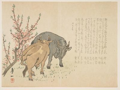 Oxen, January 1853-Yoshimura K?iitsu-Giclee Print