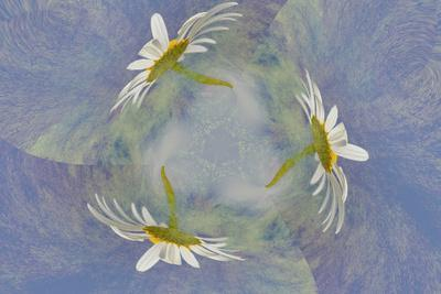 https://imgc.artprintimages.com/img/print/oxeye-daisy-composite-with-textured-background_u-l-q13cwz00.jpg?p=0