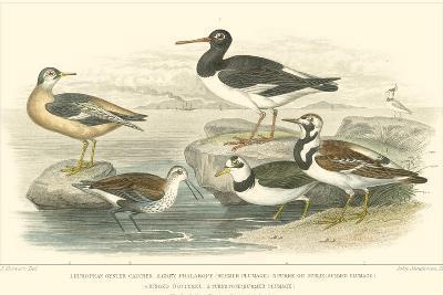 Oyster Catchers-J. Stewart-Art Print
