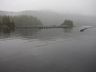 Oyster Farm in a Calm Inlet of Clayoquot Sound-Taylor S^ Kennedy-Photographic Print