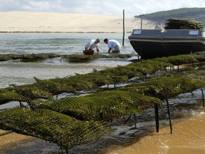 Oyster Fishermen Grading Oysters, Bay of Arcachon, Gironde, Aquitaine, France-Groenendijk Peter-Photographic Print