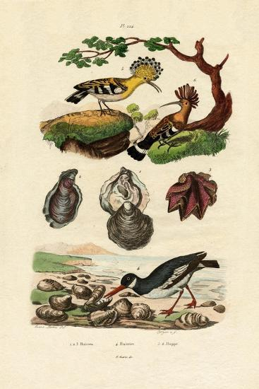 Oysters, 1833-39--Giclee Print