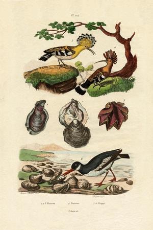 https://imgc.artprintimages.com/img/print/oysters-1833-39_u-l-pvdkyh0.jpg?p=0