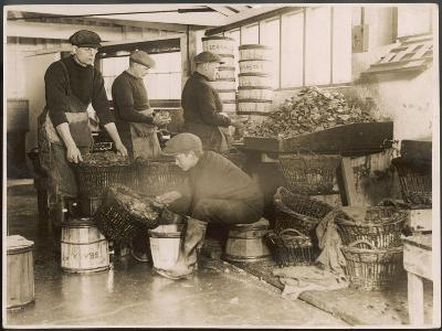 Oysters are Sorted and Packed--Photographic Print