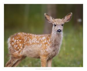 Deer Watch III by Ozana Sturgeon