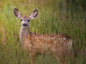 Deer Watch IV by Ozana Sturgeon