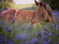 Flower Frolick VI-Ozana Sturgeon-Photographic Print