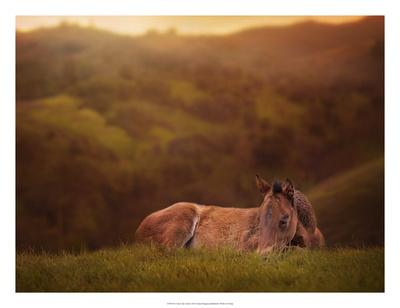 Foal in the Field I