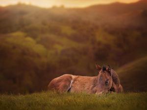 Foal in the Field I by Ozana Sturgeon